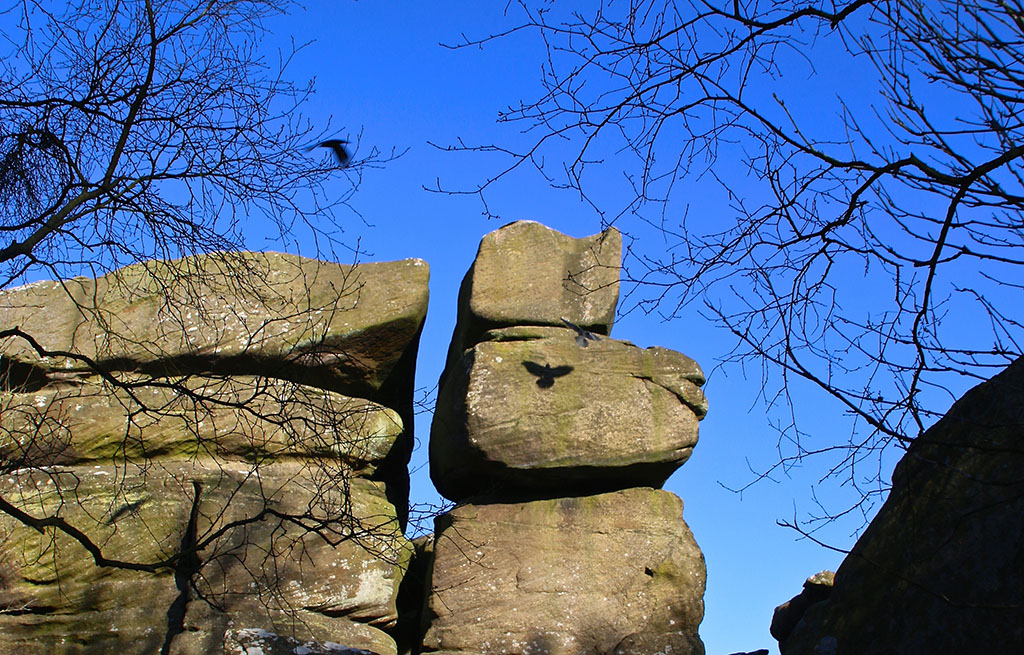 Bird 'tattoo' at Brimham Rocks