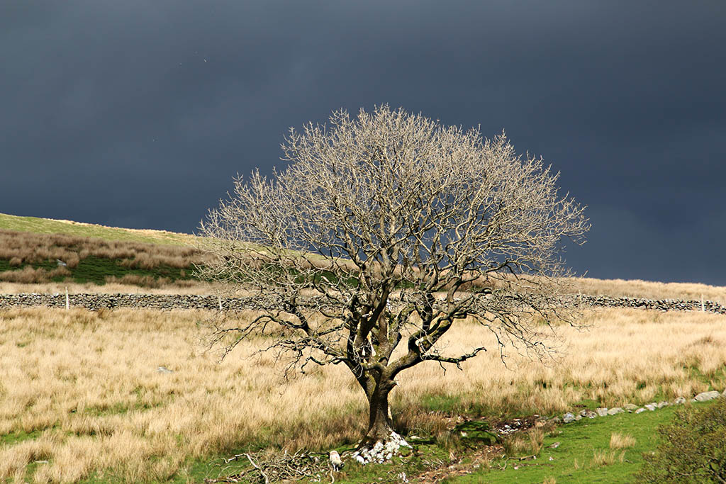Lone tree before the storm