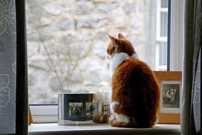 ribblesdale cat
