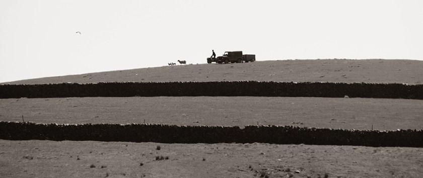 settle farmer