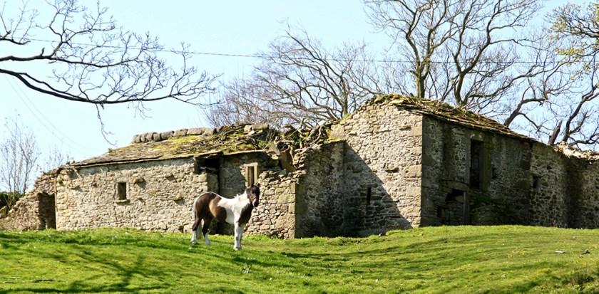 settle horse rome
