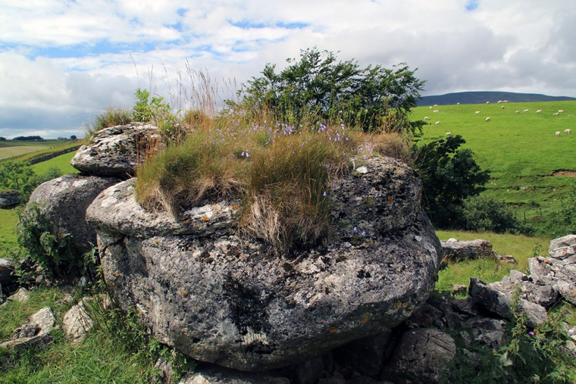 Ribble thornsrock