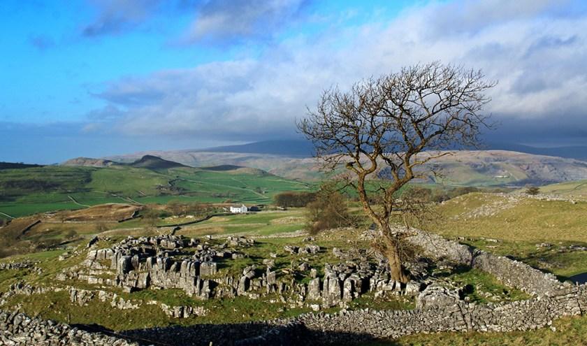 Yorkshire winskilltree