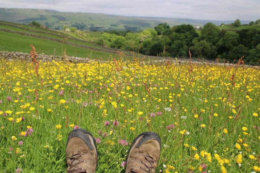 Dales meadow