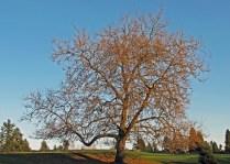 8th Hole tree