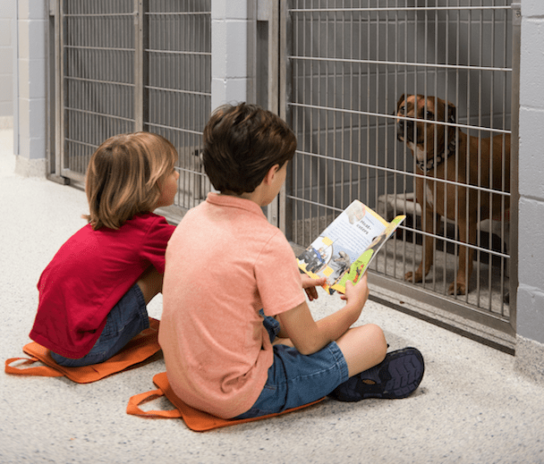 The Jax Humane Society serves the local animal population in