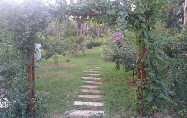 Garden in Ma'adi