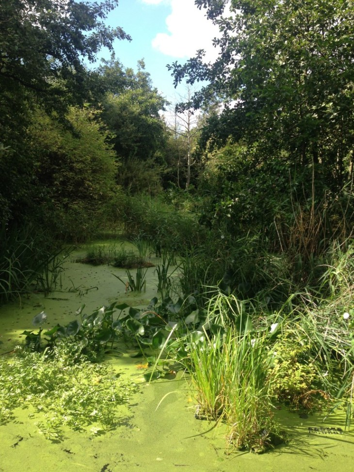A large pond attached to the nearby canal with newts and frogs