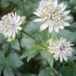 10 favourite plants of 2014