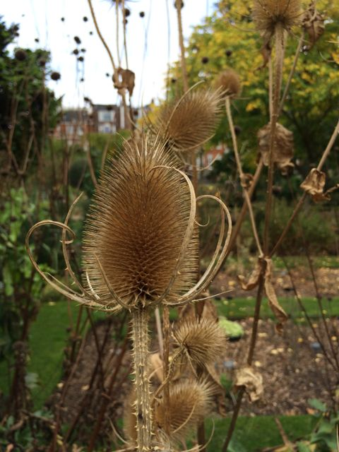 Chelsea Physic Garden Autumn / October 2014
