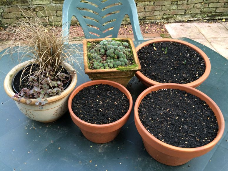 Winter and spring pots at the ready