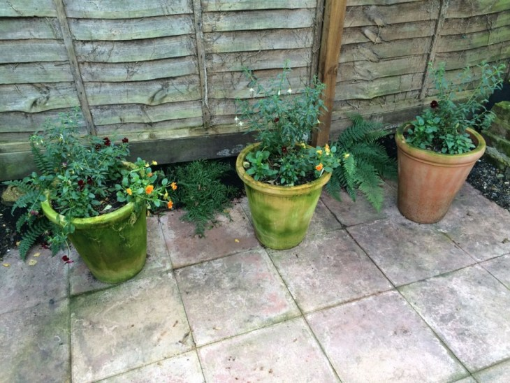 This shady pot area is doing alright. The Fuchsia 'Hawksheads' have come on well despite looking a bit dodgy mid summer, and the ferns are, unbelievably, doing really well in that scrap of soil. Some bright orange and red violas just for fun this year.