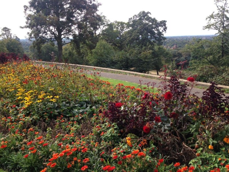At the peak of Richmond Park