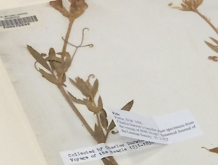 One of the many specimen samples once collected by Charles Darwin