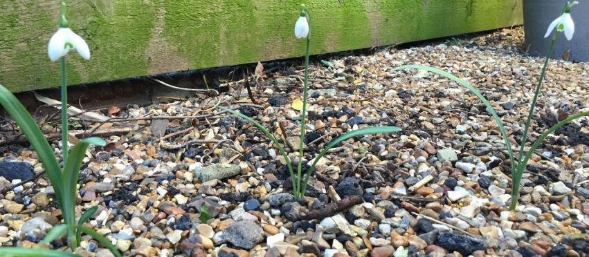 Sowing seeds, planting clematis and pruning