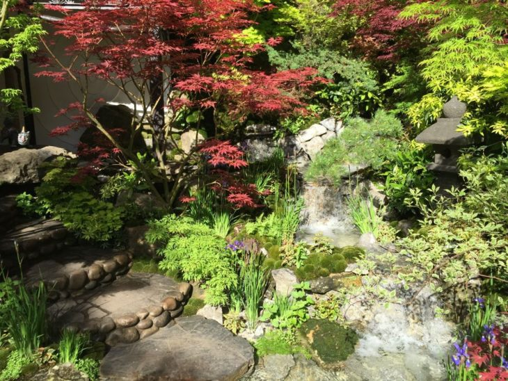Bonsai, Acers, mosses - what's not to love