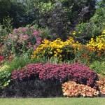 Regent's Park a high summer stunner