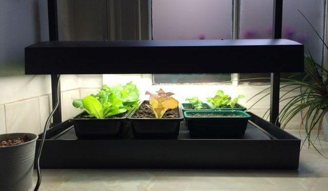 Review: Garland Grow Light Garden