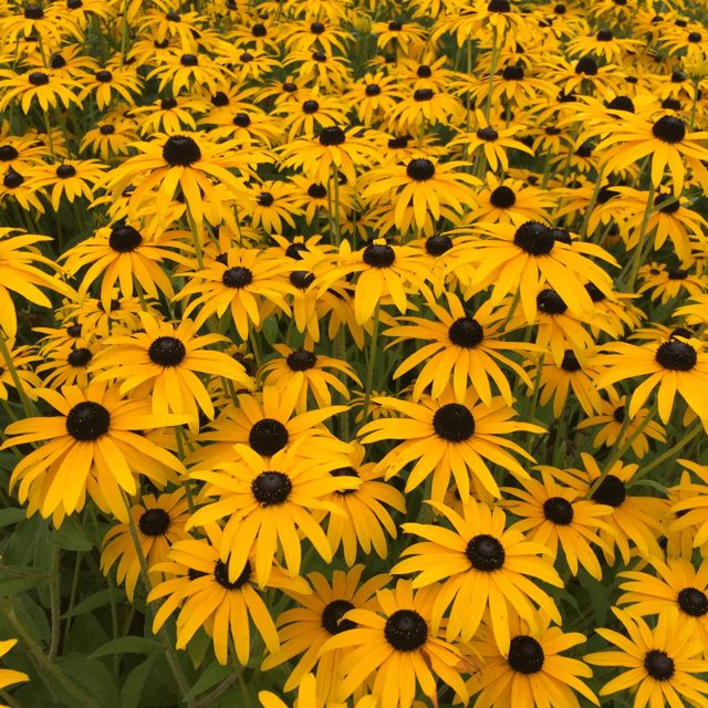 rhs-wisley-september-flower-show10