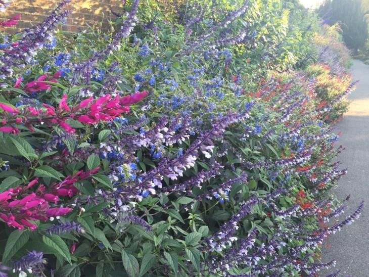 kew-gardens-autumn - 2