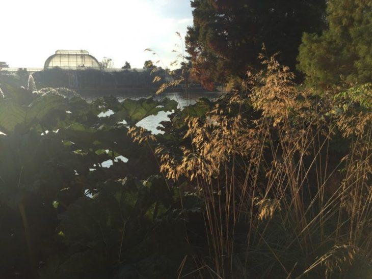 kew-gardens-autumn - 3