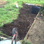 My Allotment: Weeding