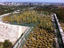 Bringing wild into urban areas - here a large scale cactus bed on the roof of the Getty Museum in Los Angeles