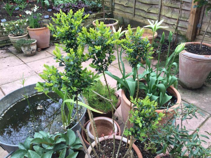 Jack Wallington, Littlebury Road topiary