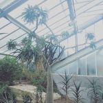 8 Glasshouses to visit in London and why