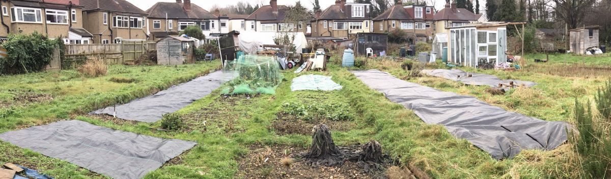 Allotment: weed suppressant membrane - beating weeds organically