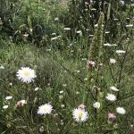 Photo gallery: Malibu's unexpectedly exquisite wild flowers