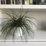 My 6 easy care comfort house plants you thought were boring but are in fact fabulous!