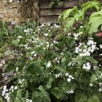 My garden, my lifeblood