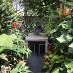 Good husbandry goes a long way in small gardens – The Watch House, Broadstairs