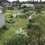 Long term planting on the allotment