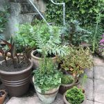 Pot's Growing On: road to our open garden