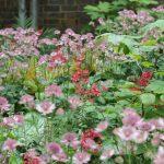 Front garden design in Clapham, London