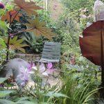 Visit our garden, 2 Littlebury Road, Clapham