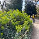 From the streets: London's green spaces in Lockdown