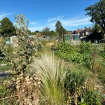 Gardening in southern England's changed climate