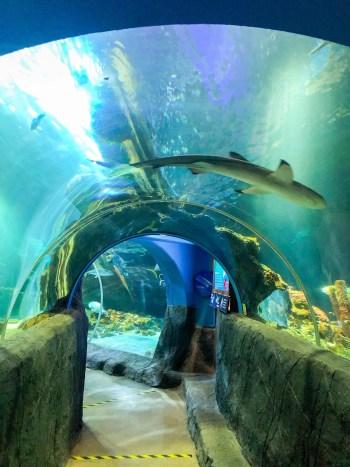 Unterwassertunnel vom Sea Life in Oberhausen