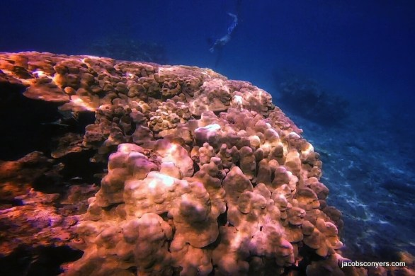 Honolua has CRAZY coral formations