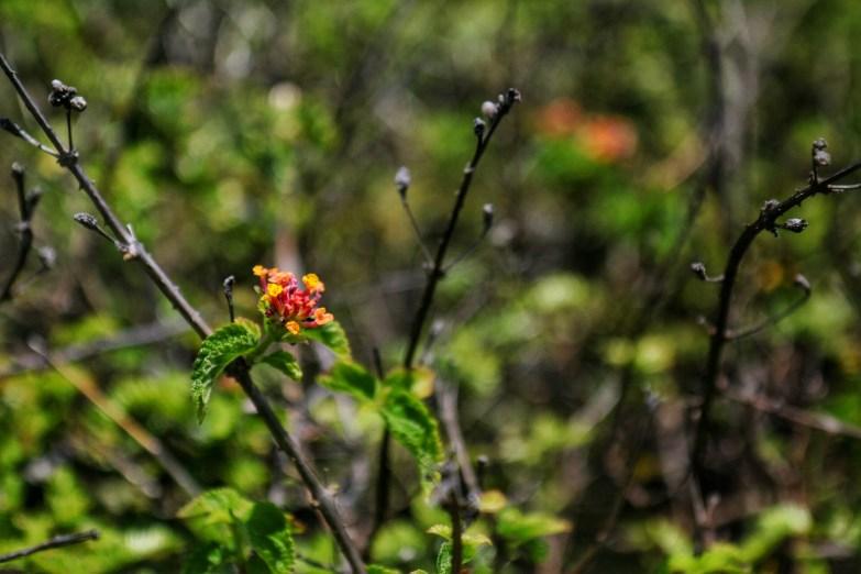 At Ohai trail