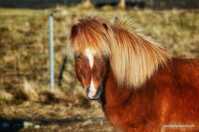 We named this horse Brett Michael