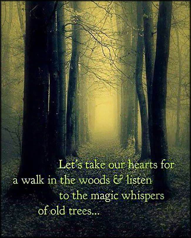 EmilysQuotes.Com-heart-walk-woods-listen-magic-whispers-old-trees-nature-amazing-inspirational-dream-unknown