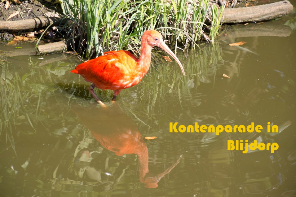 Kontenparade in Blijdorp