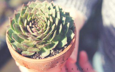 Thrive | August Goals