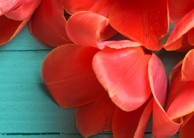 Coral and Teal Wedding Colors