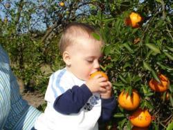 Tout plein d'oranges.