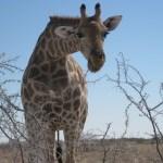 Namibia, Camping Trip